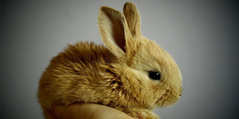 Rabbit Animal Friendly