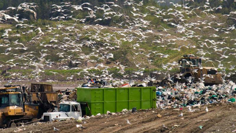 Rubbish Landfill Site - Waste, Machinery and Birds. The need to Reduce Waste at Home.