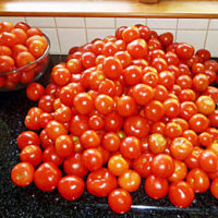 Tomato mountian ready for tomato sauce recipe
