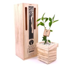 Trees Please! Lime Tree Gift