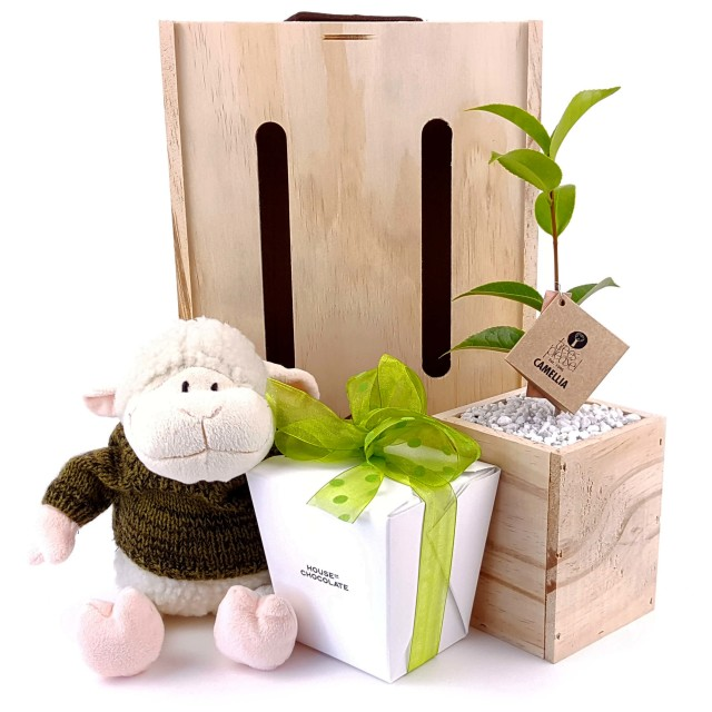 Trees please our little lamb gift by trees please green - Does olive garden deliver to your house ...