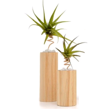 Air Plants & Stands Image