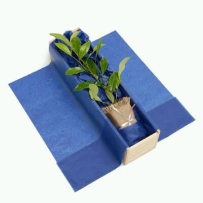 Magnolia (Port Wine) Gift Image