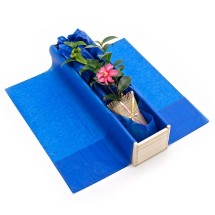 Camellia Tree Gift Image