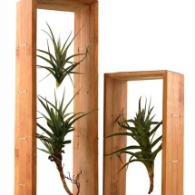 Air Plant Frame & Air Plants - Double & Single