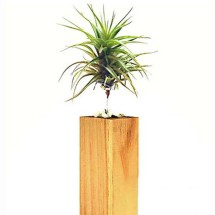 Air Trees and Air Plants, Single or Group Image