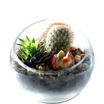 Scoop Succulent & Cactus Bowl