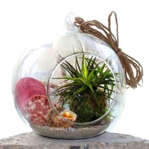 Summer Air Plant Terrarium