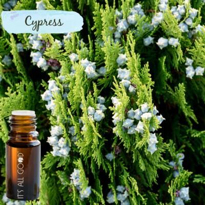 Cypress Essential Oil (Certified Organic) 10ml Image