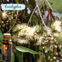Eucalyptus Essential Oil (Certified Organic) 10ml