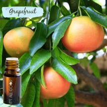 Grapefruit Essential Oil (Certified Organic)