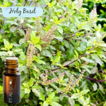 Holy Basil Essential Oil (Certified Organic) 10ml