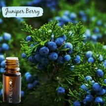Juniper Berry Essential Oil (Certified Organic) 10ml