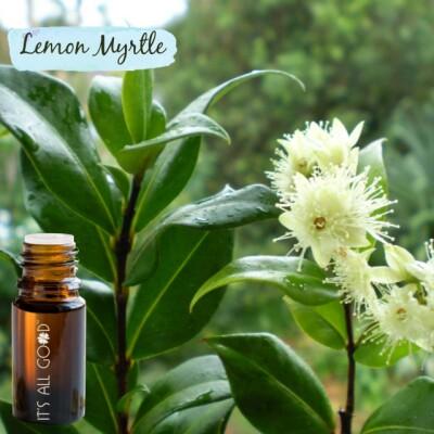 Lemon Myrtle Essential Oil (Certified Organic) 10ml Image