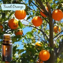 Orange (sweet) Essential Oil (Certified Organic) 10ml