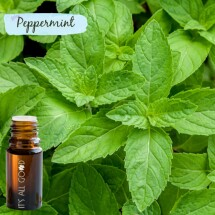 Peppermint Essential Oil (Certified Organic) 10ml