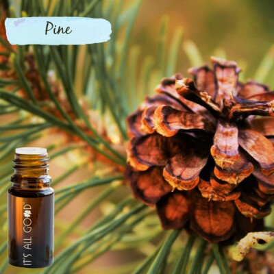 Pine Essential Oil (Certified Organic) 10ml Image