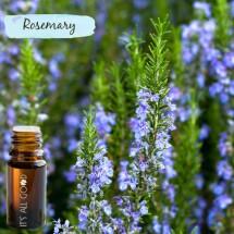 Rosemary Essential Oil (Certified Organic) 10ml
