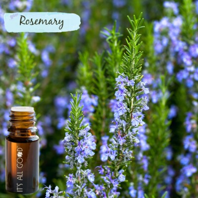Rosemary Essential Oil (Certified Organic) 10ml Image