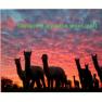 Canacare Premium New Zealand Alpaca Duvet inner 450GSM Image