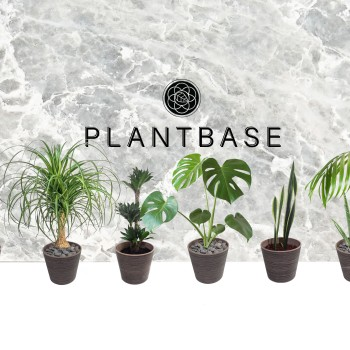 The Plant Base Store Photo